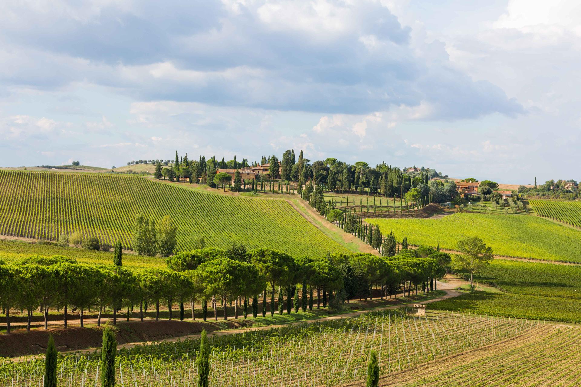Carpineto e la digitalizzazione del vino